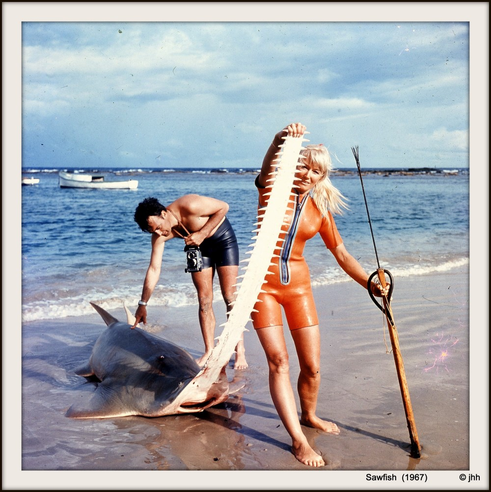 Ron and Valerie at Minnewater (NSW) with a fisherman's Green Sawfish they helped catch